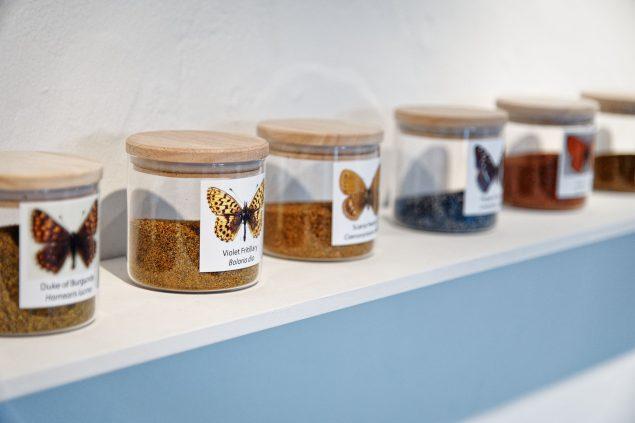 Signe Klejs: Blown Away - A butterfly Necropolis, 2019