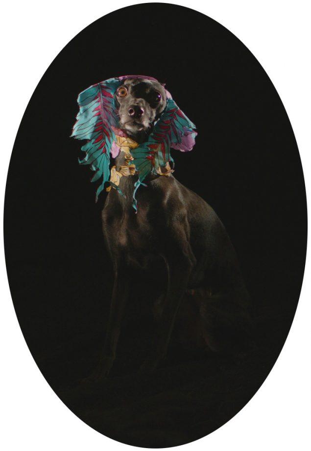 Kim Richard Adler Mejdahl, Puppymaster, 2019