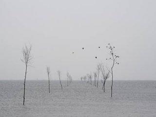 Henrik Saxgren: Vandvejen til Mandø. Pressefoto.